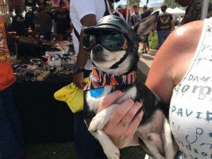 Un chien motard pendant la Bike Week