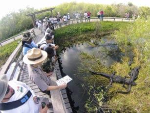 découvrez la faune et la flore de Floride dans les Everglades