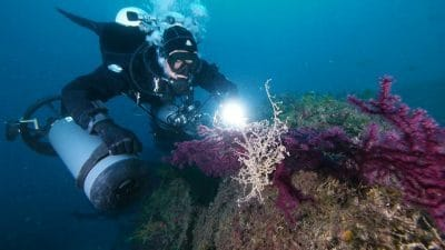 plongée sous marine dans les Keys de Floride
