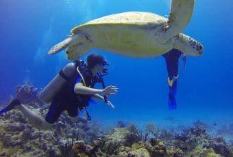 Une tortue et un plongeur au large des cotes des keys de Floride